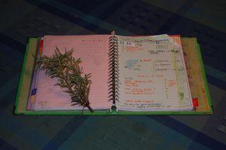 Book rosemary 2