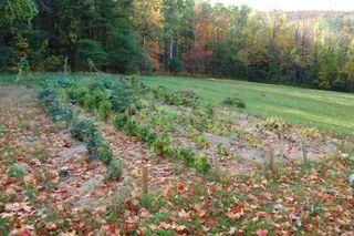 Fall garden 2007