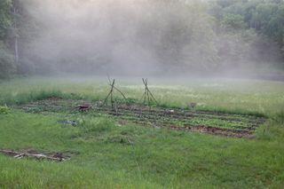 Garden mist 2 june 08
