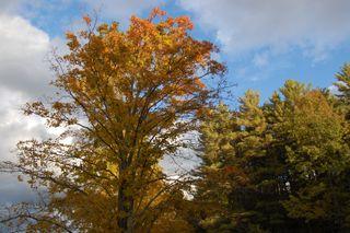 Fall vivid tree
