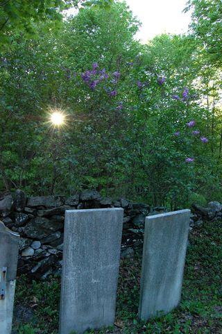 Sunstar lilac graves