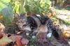 Kittygarden2