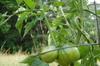 Garden_013