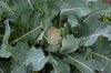 Garden_027